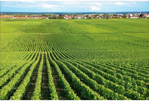 Bordeaux - Vinuri Franța